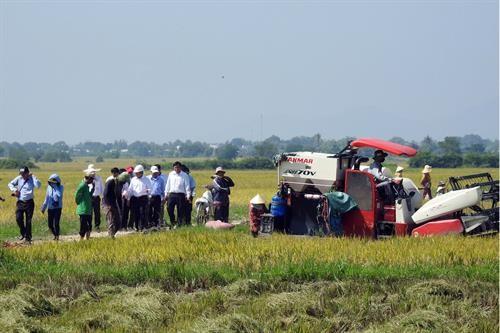 Xây dựng mô hình sản xuất cánh đồng lớn ở Ninh Thuận - ảnh 1