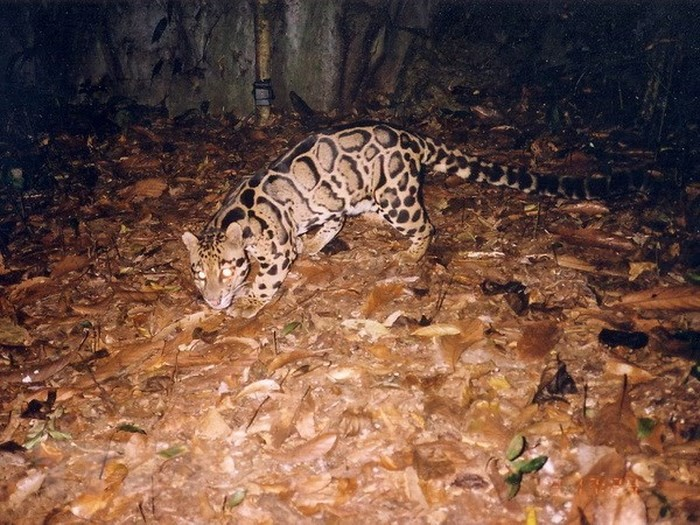 Tăng cường hợp tác quốc tế nhằm bảo tồn các loài động vật hoang dã nguy cấp  - ảnh 1