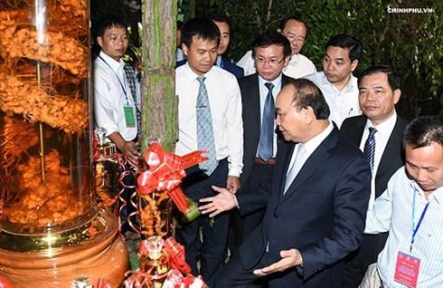 Thủ tướng Nguyễn Xuân Phúc kỳ vọng sâm Ngọc Linh mang lại giá trị tỷ USD thập niên tới - ảnh 1