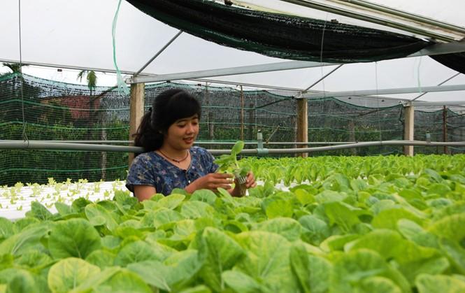 An toàn thực phẩm và một nền nông nghiệp sạch - ảnh 3