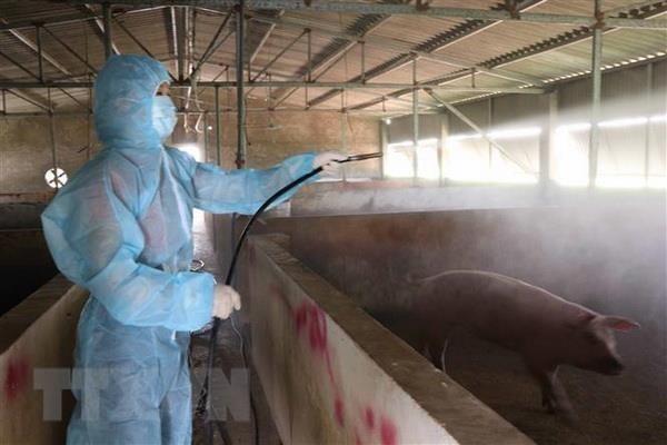 Việt Nam đủ năng lực nghiên cứu, sản xuất vaccine dịch tả lợn Châu Phi - ảnh 1