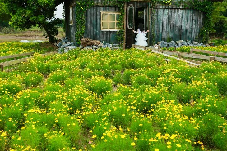 Ngắm thảo nguyên hoa giữa lòng Hà Nội - ảnh 9