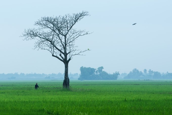 "Amazing photos of ""Lonely Trees"" in Vietnam - ảnh 10"