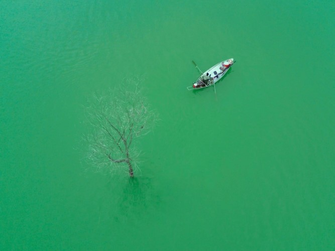 "Amazing photos of ""Lonely Trees"" in Vietnam - ảnh 11"