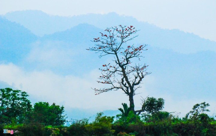 Truong Son Dong mountain range – ideal place for cloud hunters - ảnh 8