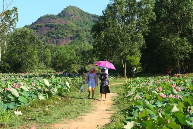 Exploring stunning lotus flower fields of Quang Nam - ảnh 10