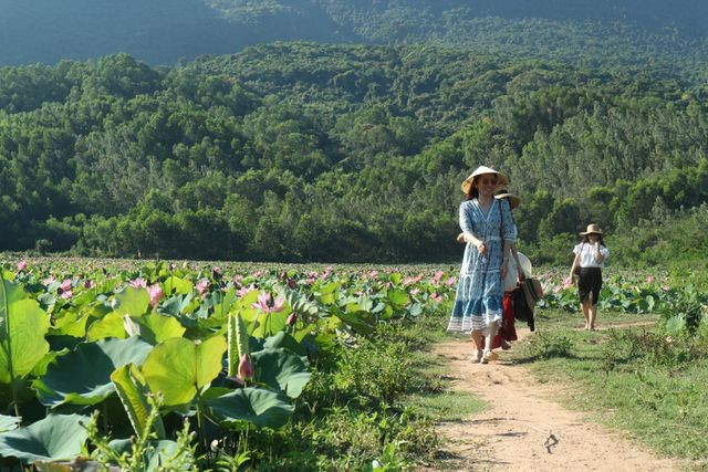 Exploring stunning lotus flower fields of Quang Nam - ảnh 7