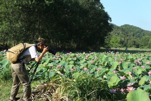 Exploring stunning lotus flower fields of Quang Nam - ảnh 8