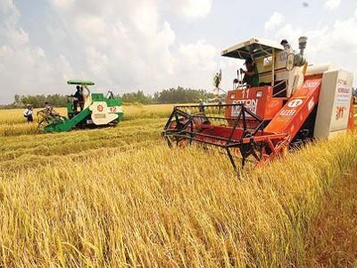 Renovación para impulsar el desarrollo de la agricultura  - ảnh 1