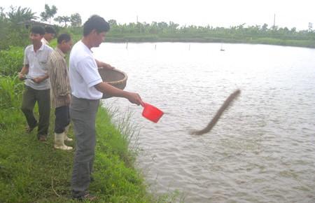 Thuy Ninh proyecta edificar modelos económicos rurales  - ảnh 2