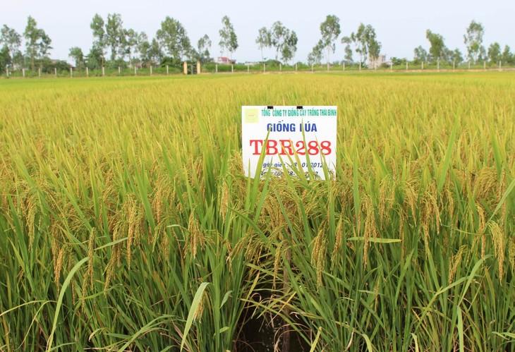 Thuy Ninh proyecta edificar modelos económicos rurales  - ảnh 1