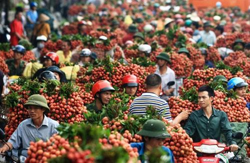 Oportunidades de exportaciones vietnamitas con el ejemplo del litchi  - ảnh 2