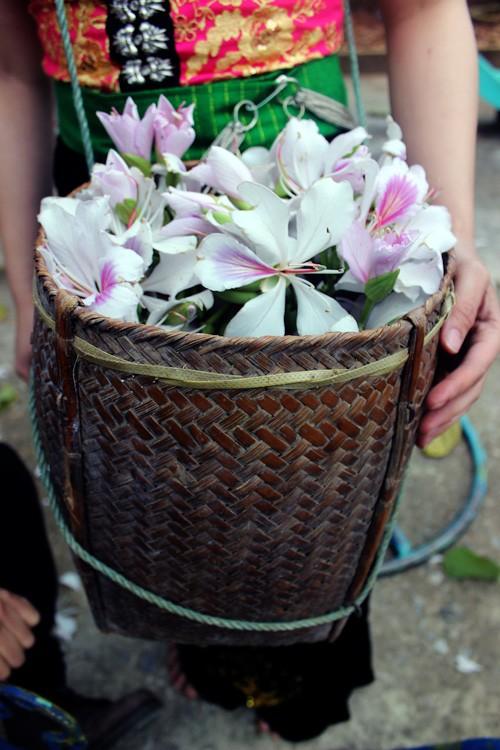 Manjares preparados con flores de Bauhinia en tierra septentrional de Vietnam - ảnh 4