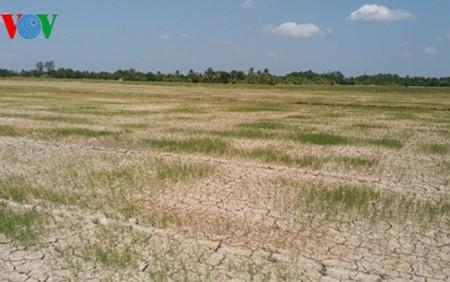 Vietnam en los esfuerzos por adaptarse al cambio climático - ảnh 2