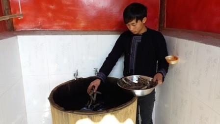Ma A Nu, un empresario ejemplar de la etnia Mong en Sa Pa - ảnh 2