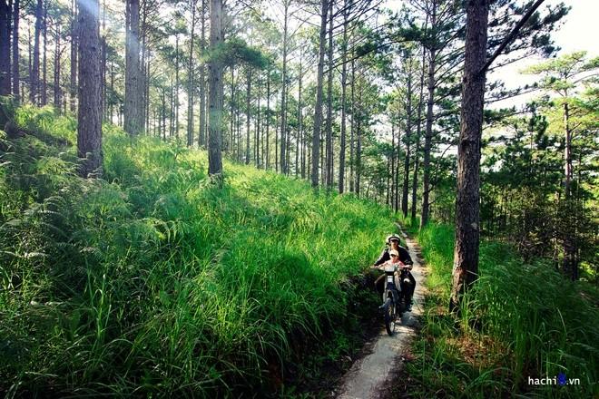 Đà Lạt, uno de los nueve destinos favoritos para descubrir en Asia  - ảnh 1