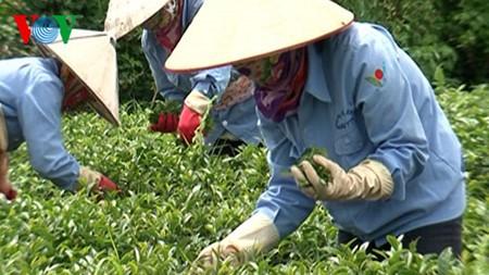 Vietnam logra casi 68 mil millones de dólares en exportaciones durante los primeros 5 meses de 2016 - ảnh 1