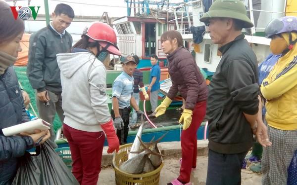 Pescadores vietnamitas cosechan abundantes recursos marítimos en primer viaje en alta mar   - ảnh 1
