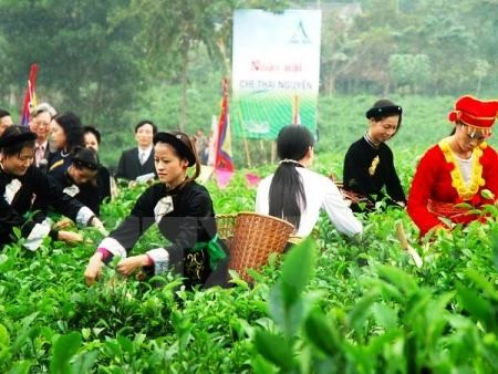 Promocionan producto estratégico del té vietnamita de Thai Nguyen  - ảnh 1