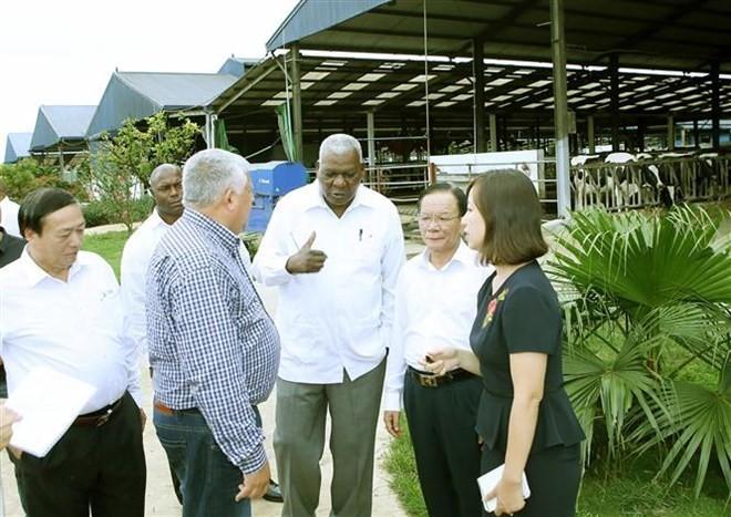 Delegación cubana visita granja lechera en la provincia de Son La - ảnh 1