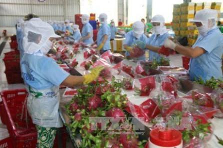 Promocionan el tratado de Libre Comercio Vietnam-Unión Europea  - ảnh 1
