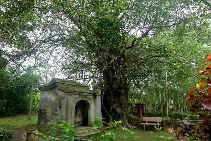 Valores patrimoniales de una antigua aldea en el centro de Vietnam - ảnh 3