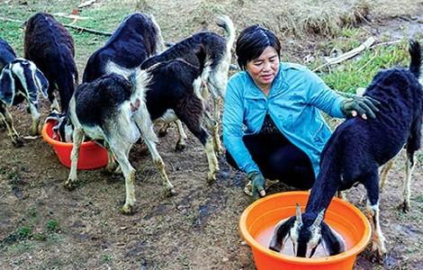 Nguyen Van Dinh con reconversión exitosa del modelo agrícola ante el cambio climático - ảnh 1