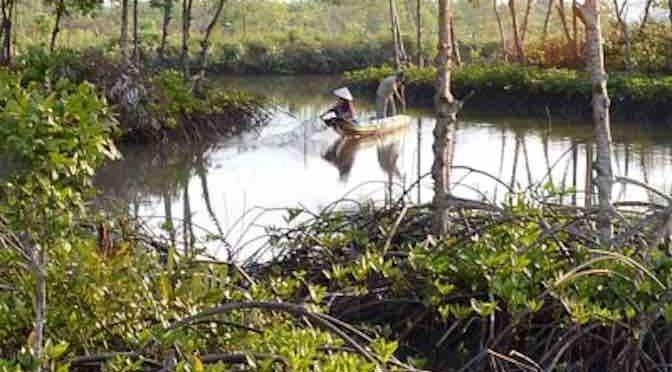 การเพาะเลี้ยงสัตว์น้ำแบบธรรมชาติในพื้นที่ป่าชายเลน - ảnh 2