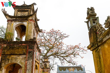 งิ้วแดงบานสะพรั่งในเขตชนบทภาคเหนือเวียดนาม - ảnh 10