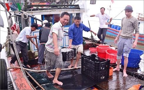 ชาวประมงจังหวัดกว๋างจิออกทะเลจับปลาได้ผลดีนำโชคมาให้แก่ปีใหม่ประเพณี - ảnh 1