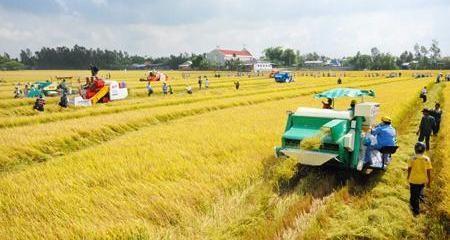 จังหวัดท้ายบิ่งห์พัฒนาเศรษฐกิจการเกษตร - ảnh 1