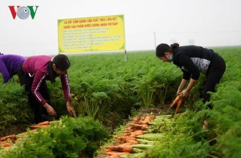 ผลักดันการเชื่อมโยง กุญแจแห่งการขยายตัวในการส่งออกสินค้าการเกษตร - ảnh 1