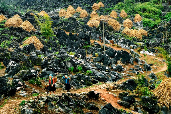 Mong ethnic people cultivate on rocks - ảnh 1
