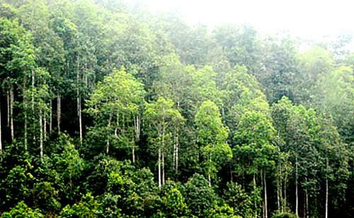 Đến năm 2020 tỷ lệ che phủ rừng toàn quốc đạt 42%  - ảnh 1