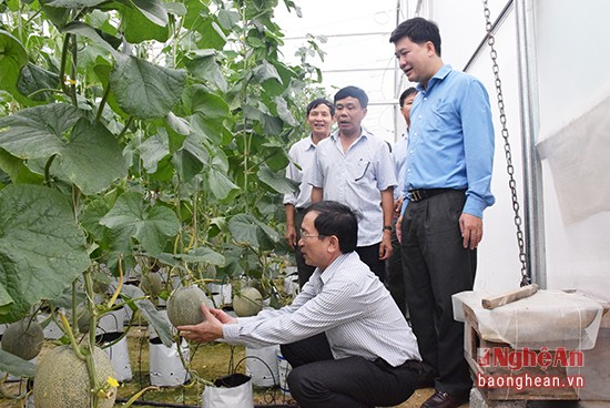 Sản xuất nông nghiệp hữu cơ - hướng phát triển tất yếu và bền vững  - ảnh 1