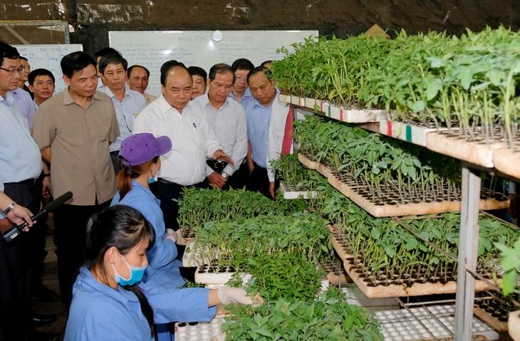 Thủ tướng thăm mô hình nông nghiệp sạch tại Lâm Đồng - ảnh 2