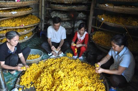 Nghề trồng dâu nuôi tằm ở Thiệu Hóa, Thanh Hóa  - ảnh 3