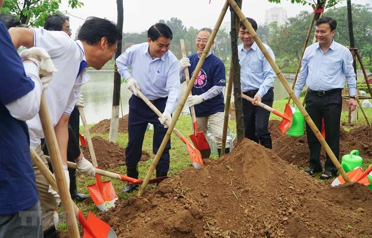 Hoa anh đào, cầu nối của tình hữu nghị Việt Nam-Nhật Bản - ảnh 1