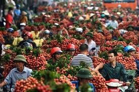 Tỉnh Bắc Giang đẩy mạnh xúc tiến thương mại tiêu thụ vải thiều - ảnh 1
