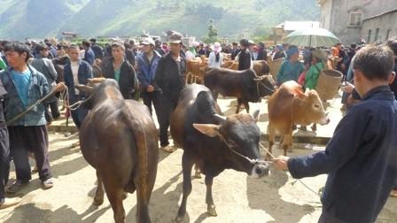 ตลาดนัดวัวแหม่วหวาก - ảnh 3