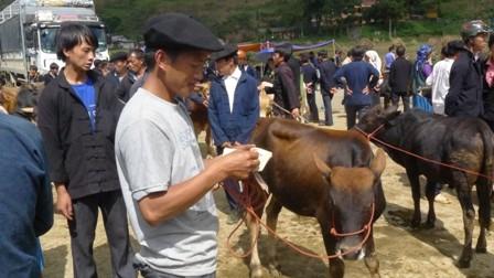 ตลาดนัดวัวแหม่วหวาก - ảnh 2