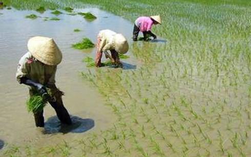 ธนาคารโลกสนับสนุนเวียดนามในการเปลี่ยนแปลงใหม่การเกษตร - ảnh 1