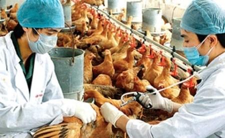 ยับยั้งโรคไข้หวัดนกH7N9 ที่อาจลามเข้าสู่เวียดนามอย่างเร่งด่วน - ảnh 1