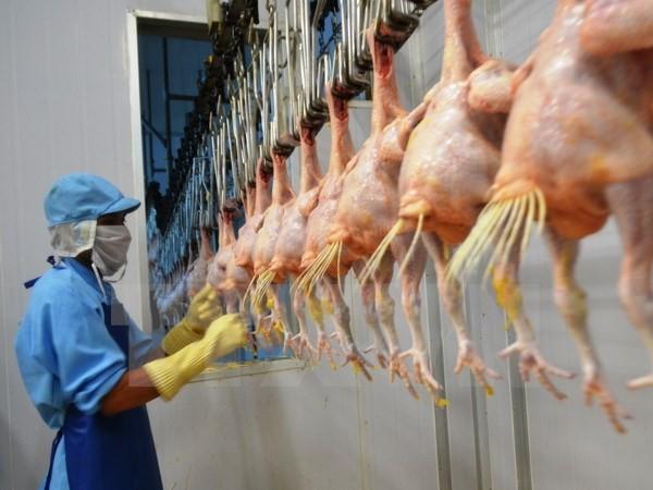 Lô gà đầu tiên của Việt Nam xuất sang Nhật vào ngày 9/9 - ảnh 1