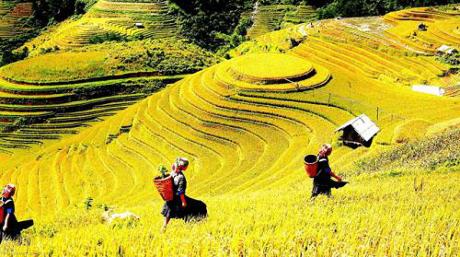 Yên Bái: Sẵn sàng cho Tuần Văn hoá -  Du lịch Ruộng bậc thang Mù Cang Chải 2017 - ảnh 1