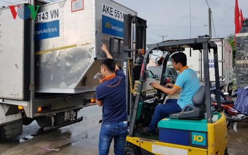 Việt Nam xuất khẩu lô thanh long tươi đầu tiên sang Australia - ảnh 1