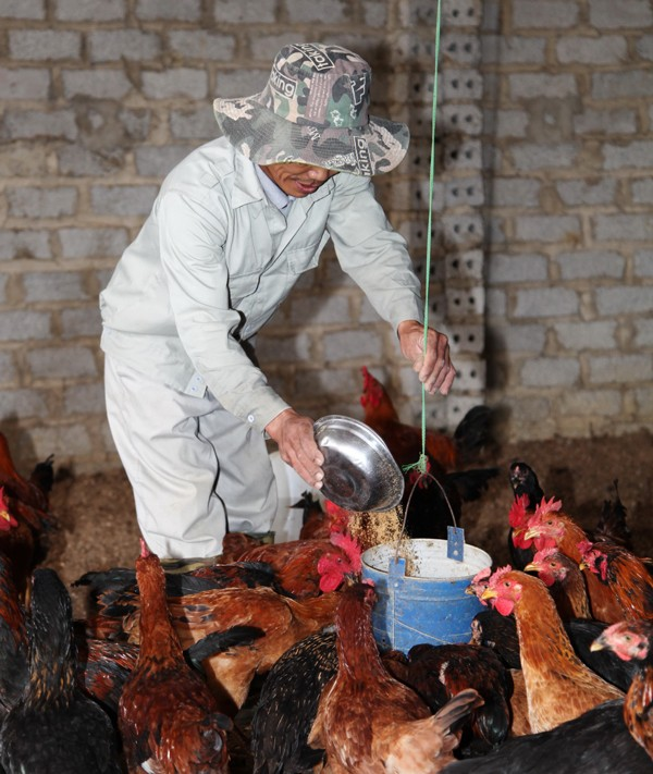 Từ nông trại sạch đến bàn ăn xanh - ảnh 4