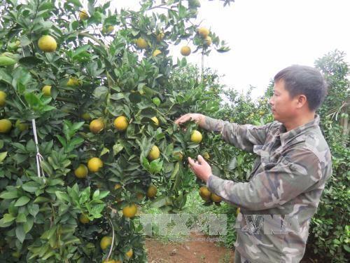 Tỉnh Hòa Bình quảng bá trái cây đặc sản  - ảnh 1