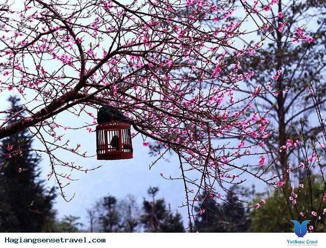 Lễ hội hoa đào trên Cao nguyên đá Đồng Văn - ảnh 1
