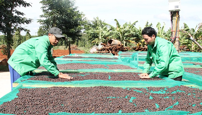Nâng cao giá trị cây cà phê và phát triển vùng kinh tế Tây Nguyên - ảnh 2